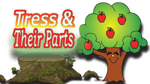 parts of the tree kids vocabulary youtube