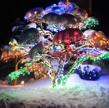 trail of lights denver massive this denver botanic gardens trail of lights