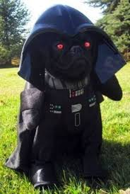 Halloween Dogs Costumes Dog Halloween Costumes 17 Crazy Pug Pics