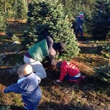 brown s christmas tree farmer brown s christmas tree fram 12 reviews christmas trees