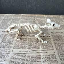 Halloween Decorations Skeleton Bones by Aliexpress Com Buy New Skeleton Rat 100 Plastic Animal Skeleton