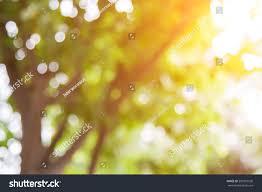 Natural Light Natural Light Blur Stock Photo 503210536 Shutterstock