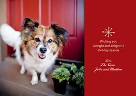 5 photo tips for pet cards