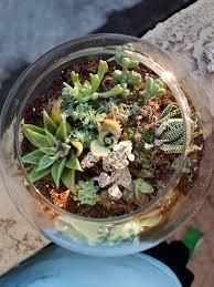 cook love craft fish bowl succulent garden succulent pots
