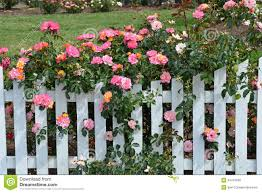 Different Types Of Fencing For Gardens - picket fence with white roses google search outdoors