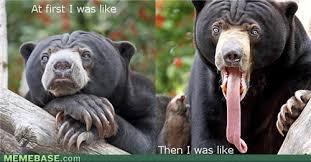 Da Bears Meme - 10dec14 da bears