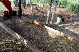Benefits Of Backyard Chickens by Composting With Chickens Backyard Chickens