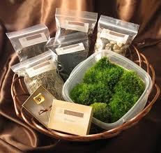 diy moss terrarium kit apartment therapy