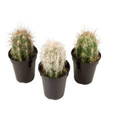 13 succulents that are native cactus succulents u0026 cactus plants garden plants u0026 flowers