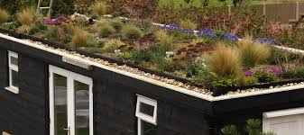 roof garden plants the green roof garden an englishman s garden adventures