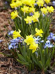 Our Favorite Plants How To by What Should I Plant Together Plants Winter Start And Landscaping