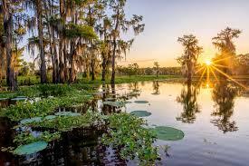 Louisiana swamp photographs andy crawford photography