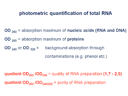 gene quantification u0026 mrna analysis methods u0026 mrna quantification