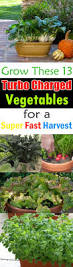 396 best container vegetable gardens images on pinterest