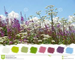 beautiful wildflowers color palette stock images image 38675514
