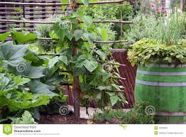 vegetable flower container gardening ideas and seg2011 com