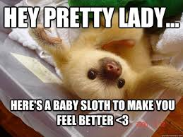 Feel Better Meme - feel better sloth memes quickmeme