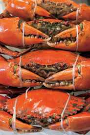 10 best places to eat mud crab in queensland travel2next