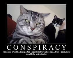 Conspiracy Meme - funny cat conspiracy meme imgur