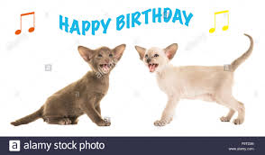 singing happy birthday birthday card with two singing baby cats singing happy birthday