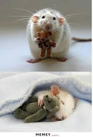 Mouse Memes - mouse memes funny mouse pictures memey com