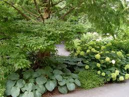dining room hosta garden designs shade garden ideas hostas
