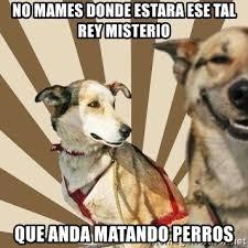 Stoned Dog Meme - images concerned dog meme