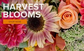Thompson Florist by Park Ridge Florist Flower Delivery By All In Bloom Designs
