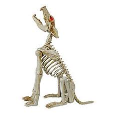 Halloween Yard Decorations Dog Skeleton by Halloween Decorations Halloween Lights Kmart
