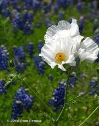 wedding flowers hshire wildflowers blue best flower 2017