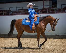 how far can a horse travel in a day images The arabian horse jpg