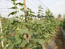 Climbing Plant Supports - climbing plant support mesh at rs 15 square meter s climbing
