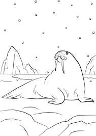 coloring page for walrus cartoon walrus coloring page free printable coloring pages