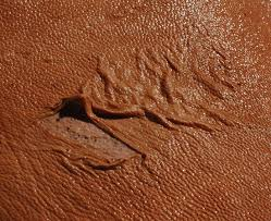 Deer Tanned Cowhide The Most Common Bark Tanning Mistakes Pitfalls To Avoid On Your