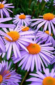 Beautiful Flower Pictures 131 Best Beautiful Flowers Images On Pinterest Plants Nature