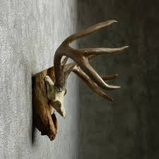 Whitetail Deer Home Decor by 25 Best Ideas About Deer Decor On Pinterest Hallway Wall With