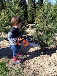 best u cut tree farms in the bay area