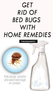 natural bed bug remedies don t let the bed bugs bite bed bugs are great hitchhikers and