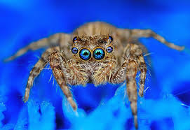 jumping spider wallpaper 28 images pictures download