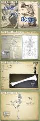 Anatomy And Physiology Skeletal System Test Best 25 Skeletal System Activities Ideas Only On Pinterest