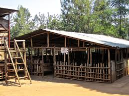shed designs shedaria knowing design a cattle shed