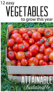 Growing Your Own Vegetable Garden by 404 Best Survival Gardening Images On Pinterest Gardening Tips