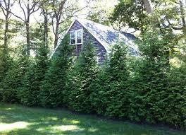 Fence Line Landscaping by 338 Best Property Line Border Images On Pinterest Backyard Ideas