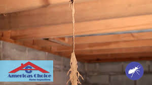termite inspection report sample pest termite inspection services specialty inspectors