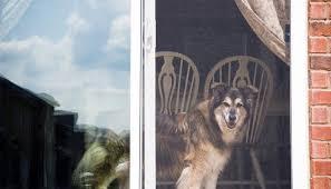 doggy door glass door can you install a dog door in a sliding glass door u2013 top dog tips