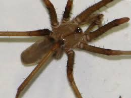 Southern House Southern House Spider Wikipedia