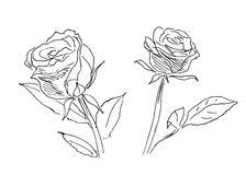 sketch of roses stock images image 12961084