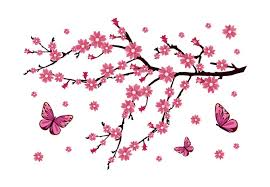 my cherry blossom with butterfly photos pictures and