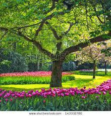 natural flower garden free stock photos download 28 541 free