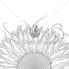 sunflower sketch gl stock images